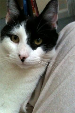 Janis, my cat